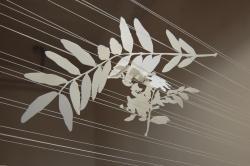 Wendy Wolf : Locust installation