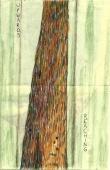 Tree, colored pencil, artist book