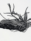 Dirt Star, Rebecca Gilbert, wood engraving