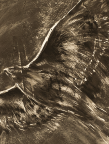 Red Tailed Hawk, drawing, charcoal, bird, raptor