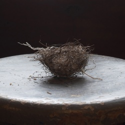 Wagner nest on chair 2018 Laurie Beck Peterson
